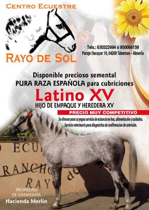Latina reitet wie der Champ